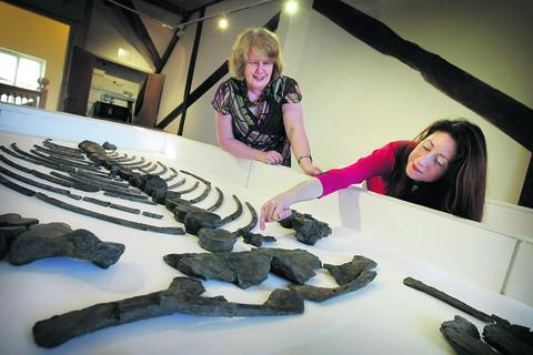 Museum curator Jane Bowen, left, and collections assistant Francoise Jackson arrange a locally-found Ichthyosaur skeleton which will be seen for the first time