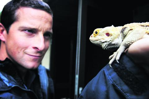 Bear Grylls holding a bearded dragon. Picture: OX54480 Ed Nix
