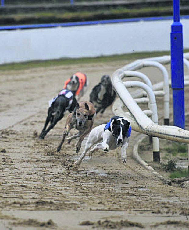 Greyhounds in action at Oxford Stadium