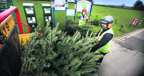 Tim Wyatt, front, and Richard Smith of Oxford City Council tree team feed Christmas trees into the chipper for recycling  OX56507 Damian Halliwell