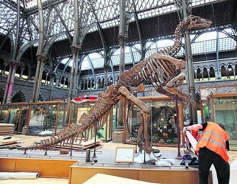 Staff at the Museum of Natural History work to cover up the seven-metre high skeleton cast of an Iguanodon. Pictures: OX56642 Damian Halliwell