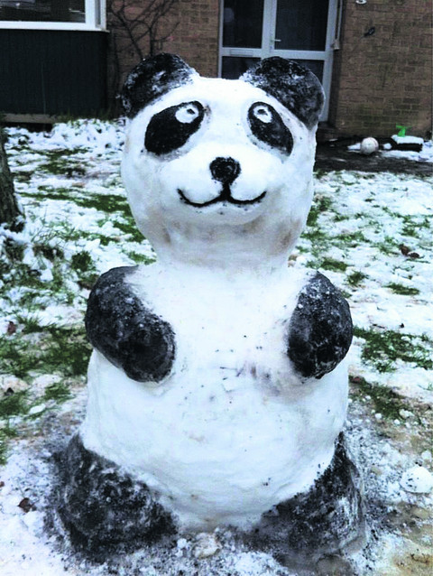 Panda tops our snow picture poll
