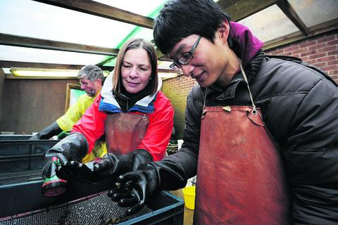 Volunteers Alyson Tanner and Gary Hsu wash soil samples at Oxford Archaeology
