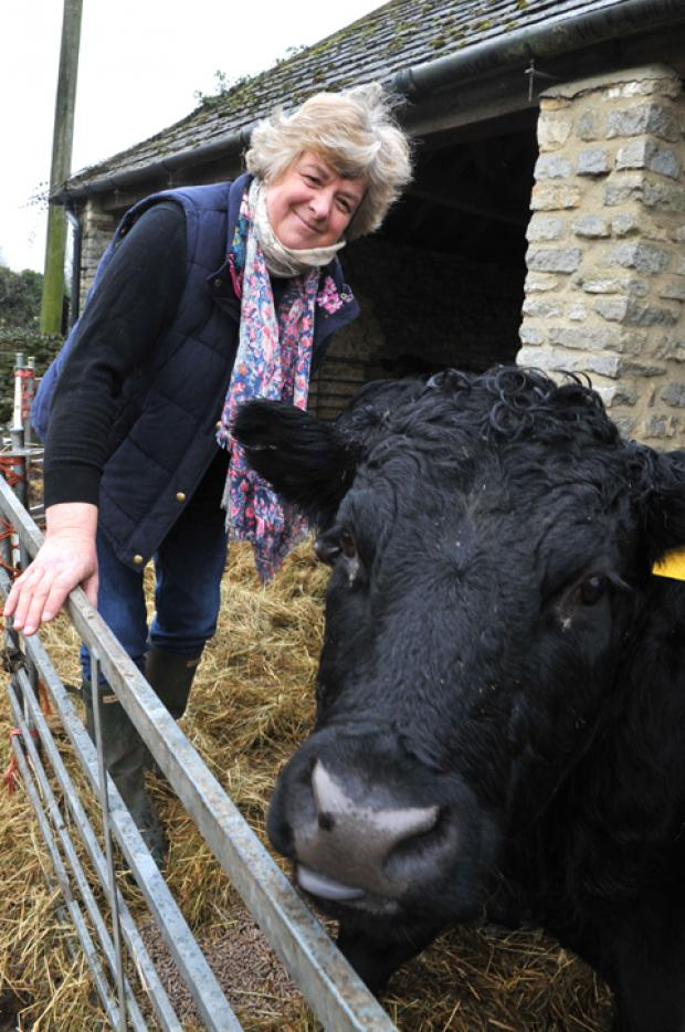 Elpie Lewis with one of her Dexter cattle