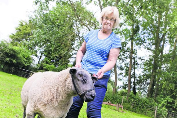 Julie Bury, pictured with ram Joshua, has had two pedigree sheep killed. Picture: OX60065 Antony Moore