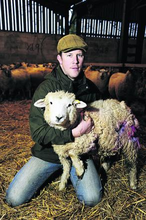 DISTRESSING: Dan Marriott with a sheep injured by a dog