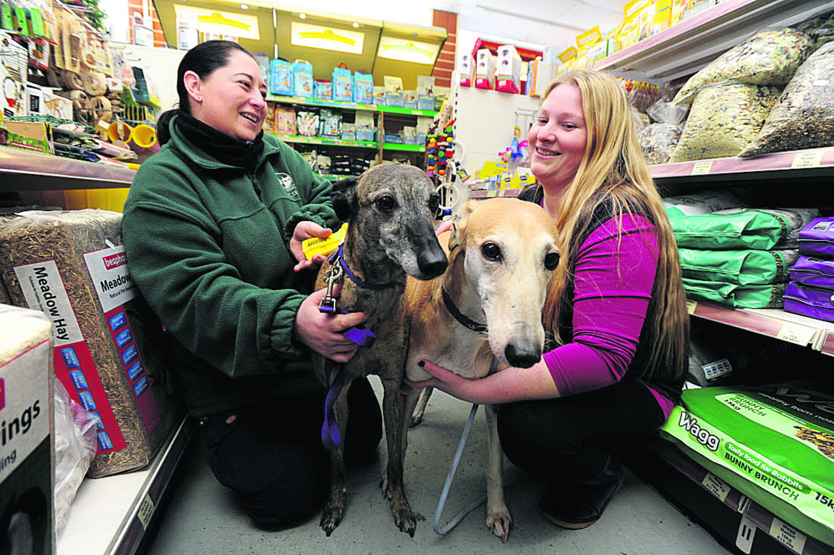 Council dog warden Dawn Long, left, with Catherine Warner and dogs Suzy, left, and Rosy. Picture: OX64897 Jon Lewis