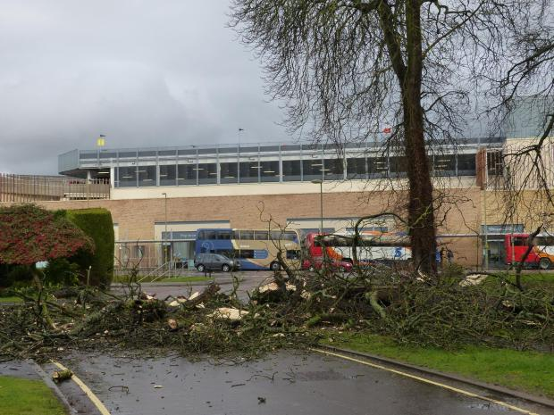 The Oxford Times: High winds topple mighty tree in Bicester