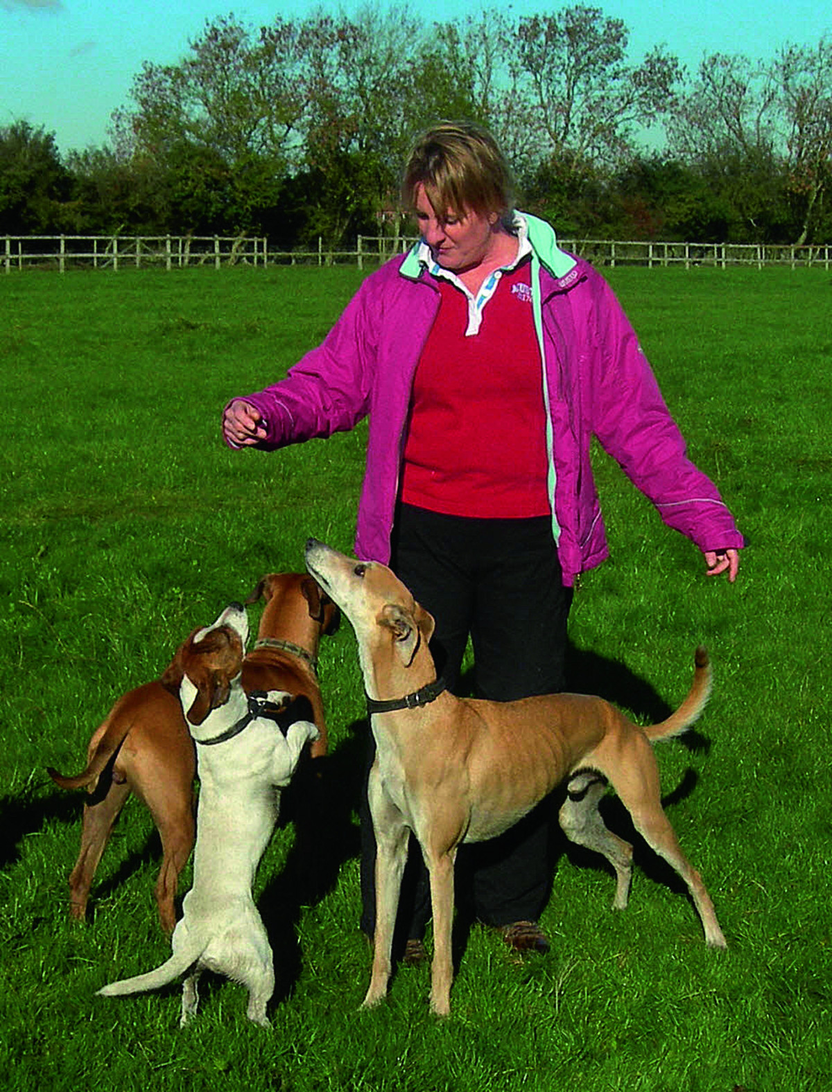 Julie Shepherd with some of the dogs she looks after