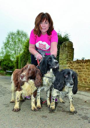 Louise Hewetson from Middleton Cheney who is walking this year's Pink Ribbon Walk, pictured with her spaniels, Flossie, Meg and Ella