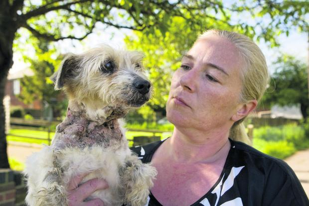 The Oxford Times: Trisha Fitzsimmons with her terrier Megan