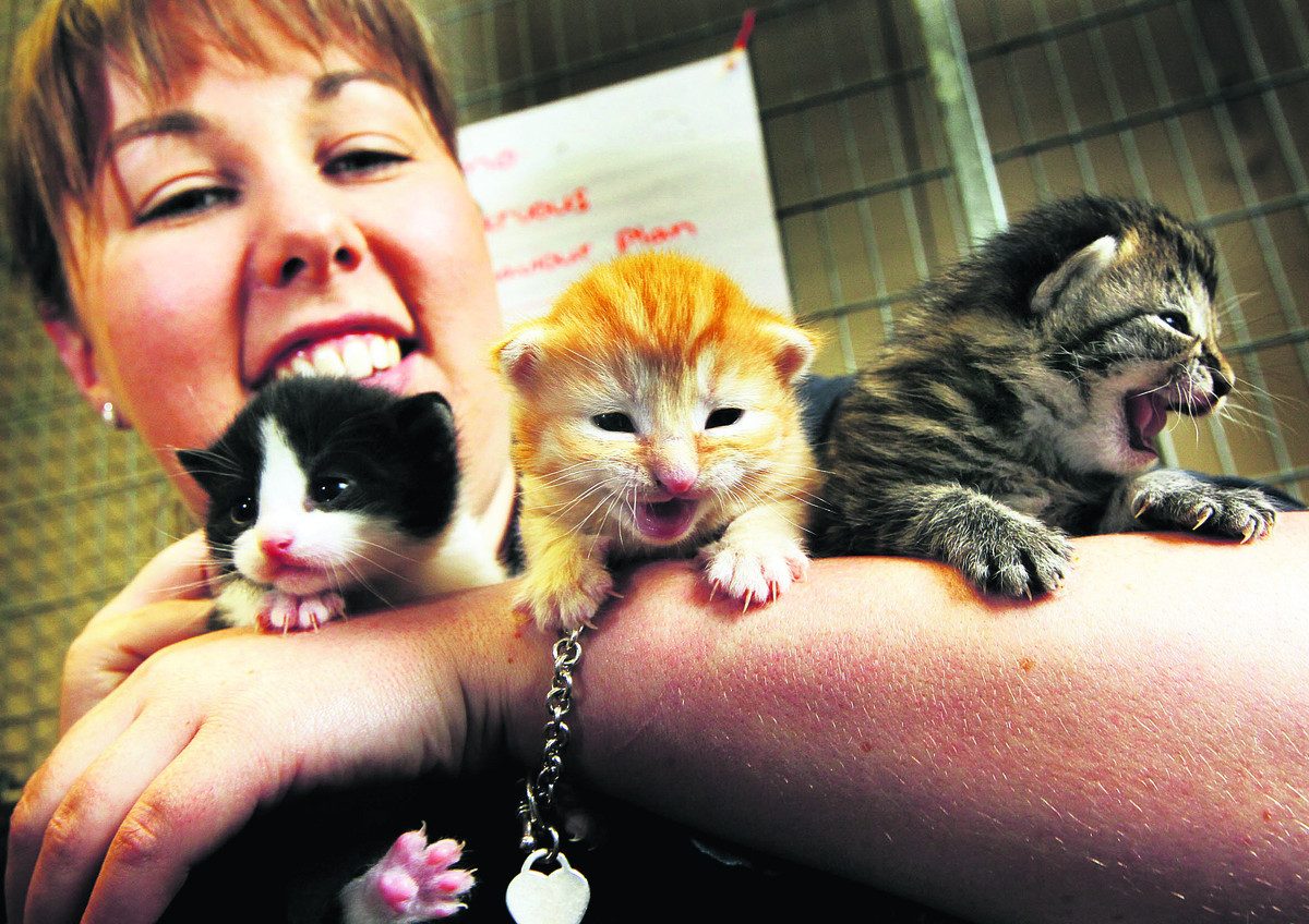 Animal welfare supervisor Hannah Wiltshire with some of the kittens at Blue Cross Burford. Picture: OX67400 Ed Nix