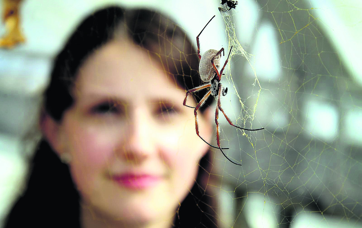 Beth Mortimer  with the Golden Orb spider