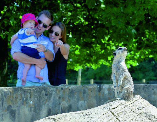 aking a look at a meerkat at Cotswold Wildlife Park during a day out organised by Young Hearts, are 15-month-old Finlay Harris, with dad Jack and mum Sarah