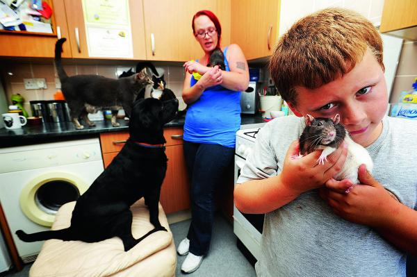 Miranda Wiggins and her nine-year-old son Harry share their home with 11 animals, but the council has said that is too many and they must get rid of three of their cats
