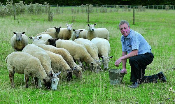 Chipping Norton butcher John Kench with his sheep in a field he rents off Hook Norton Road, from where four lambs were stolen.  Picture: OX69421 Simon Williams