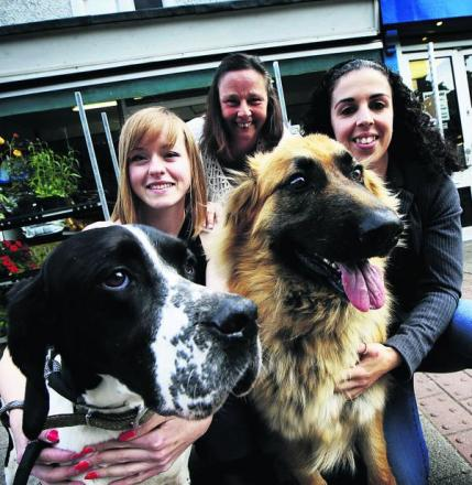 From left, Katrina Lavis with Nalu, Hayley Davies and Emma Forsyth with Nero are looking forward to the Barton Dog Show