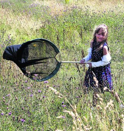 Net gains: Sweeping meadow grasses for bugs