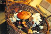 Foraging: A basket or porous bag is better for collecting mushrooms than a plastic bag