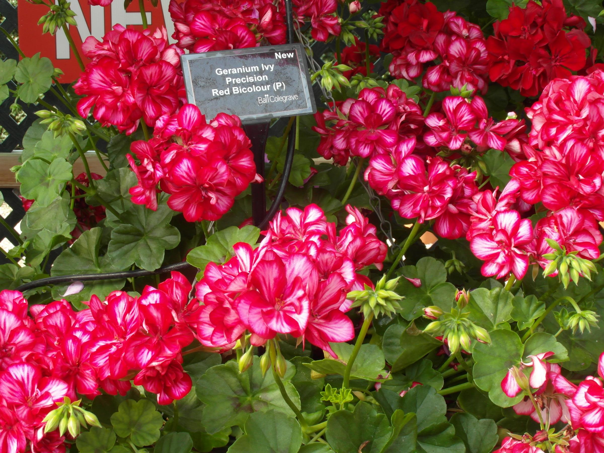 Witney Horticultural Society's Annual Plant Sale