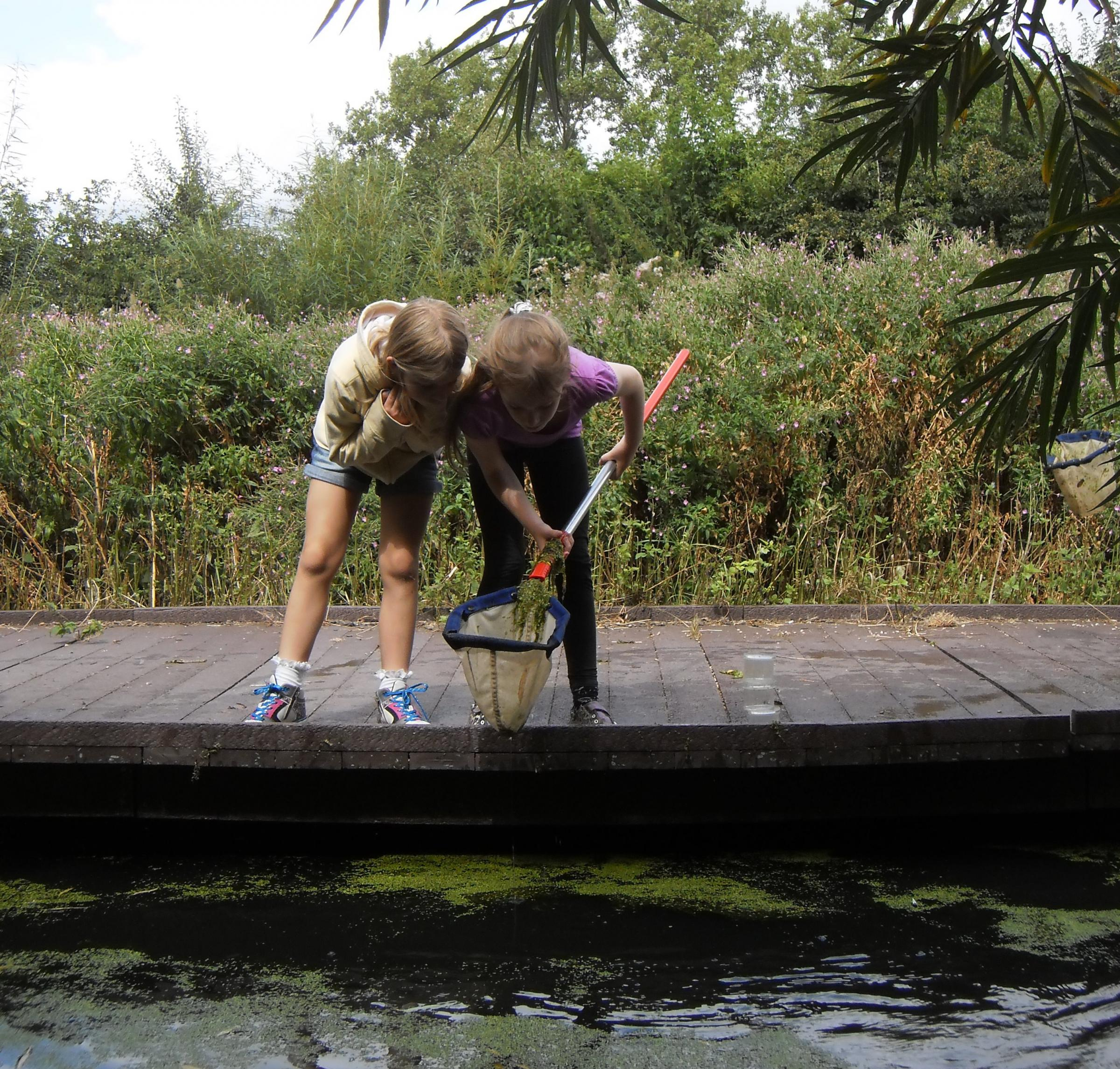 Sunday Drop-in: Pond Dipping