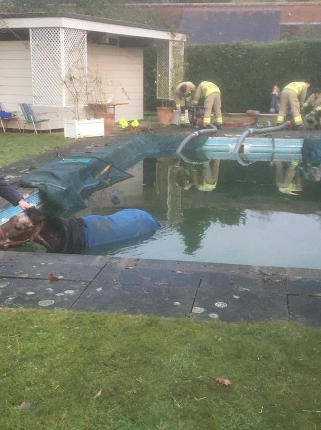 Firefighters rescue horse stuck in swimming pool near Didcot. picture by Oxfordshire Fire and Rescue