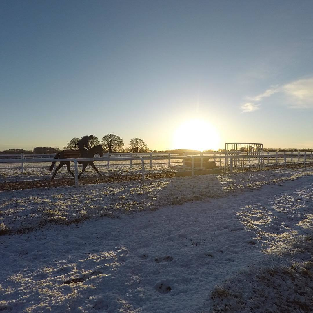 Charlie Longsdon's string battle against the elements at the trainer's Chipping Norton stables Picture: Charlie Longsdon Racing