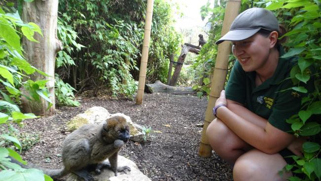 Greater Bamboo Lemur with keeper Natalie Horner at Cotswold Wildlife Park Pic: Cotswold Wildlife Park